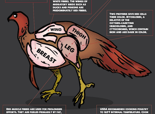 Turkey Meat: White vs. Dark