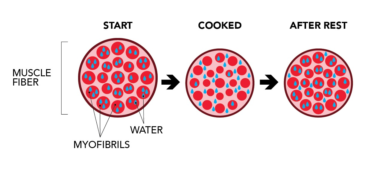 Muscle fibers reabsorb some moisture after cooking during the rest