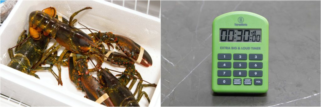 Lobster Collage 7