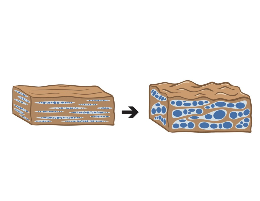 A diagram showing how water turning to steam prvides crisp skin in pork crackling